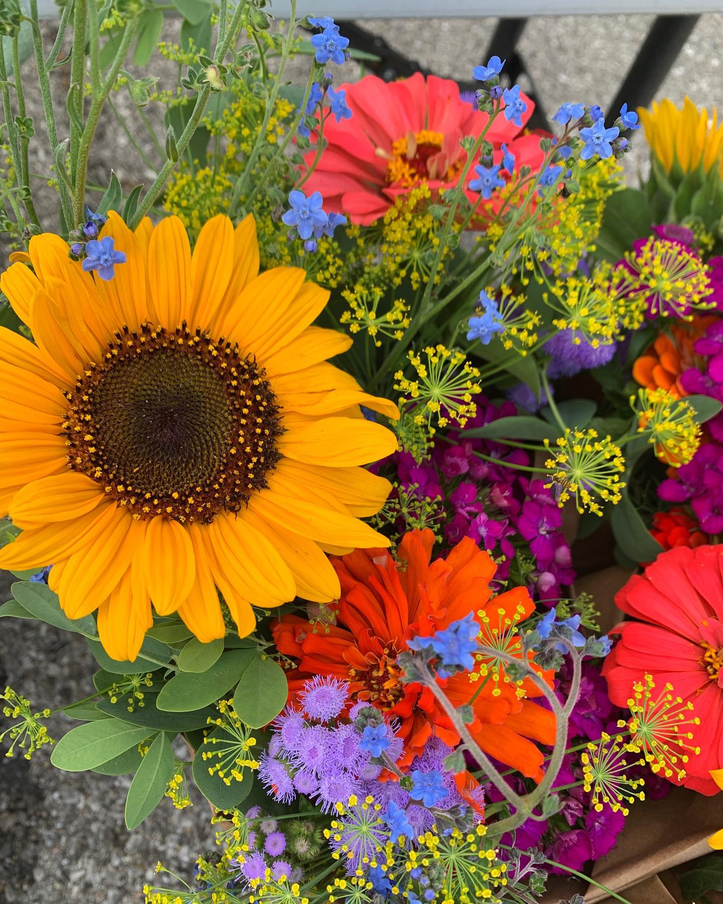 bucket of bouquets with rainbow colors featuring sunflowers, cynoglossum and zinnias