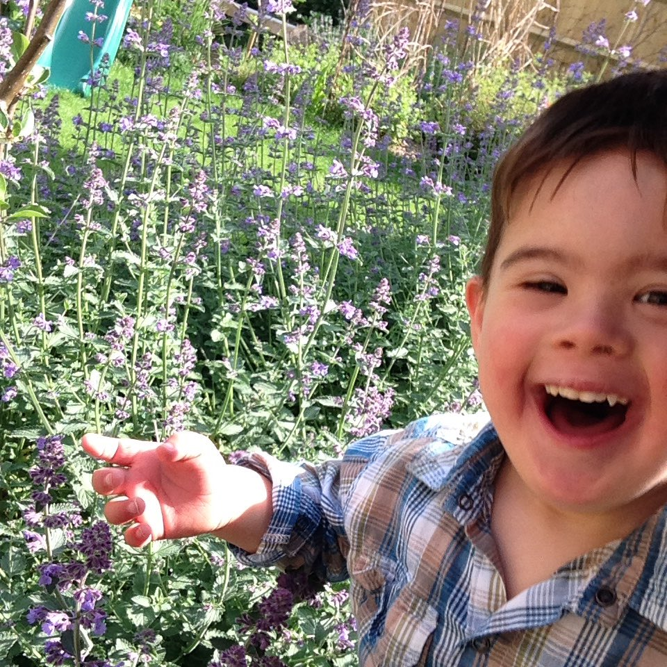 laughing child sitting in a garden with purple catmint blooming